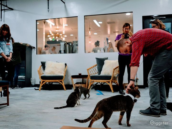 Cat Cafe Lounge and Patio Photo 4