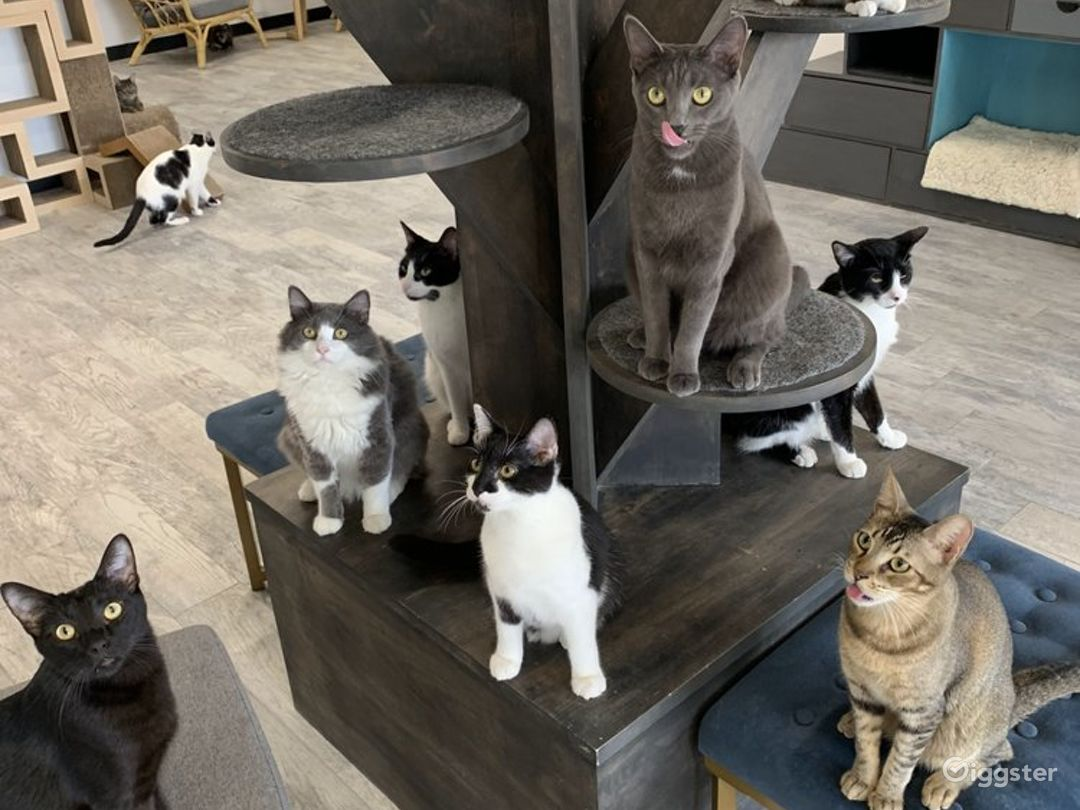 Cat Cafe Lounge and Patio Photo 1