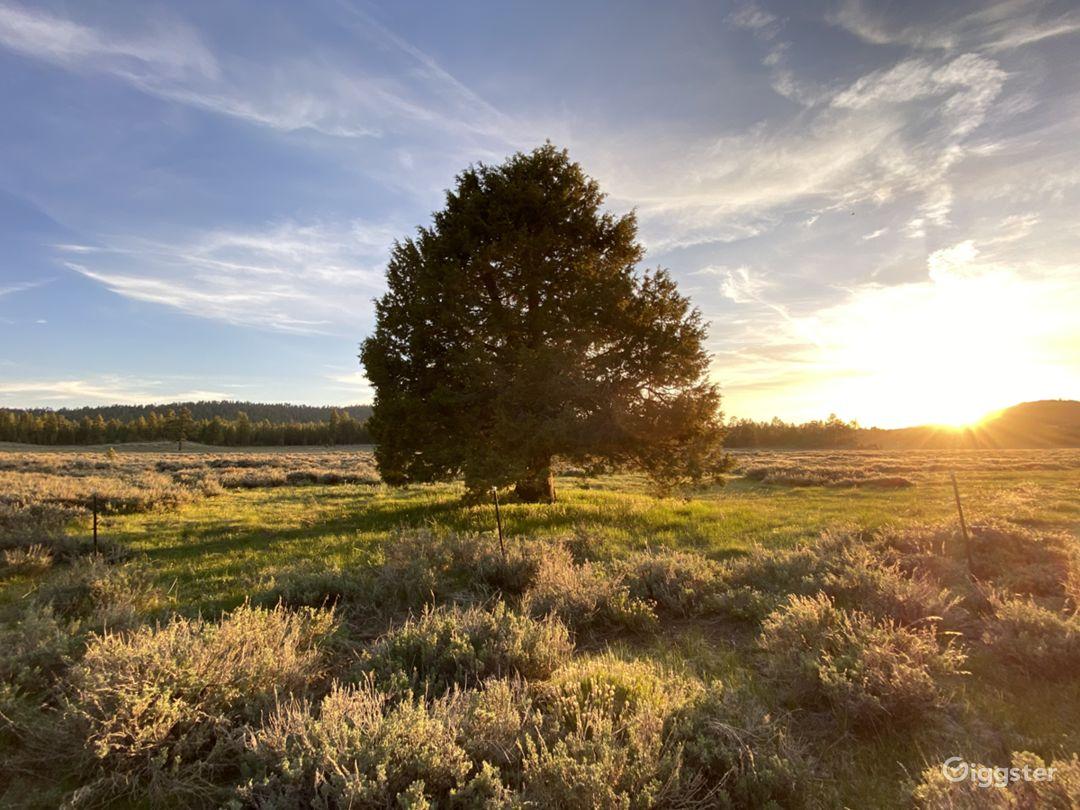 Tree in meadow.