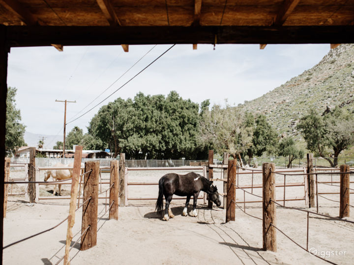 Rustic Ranch in The Tranquil Palm Springs Desert   Photo 3