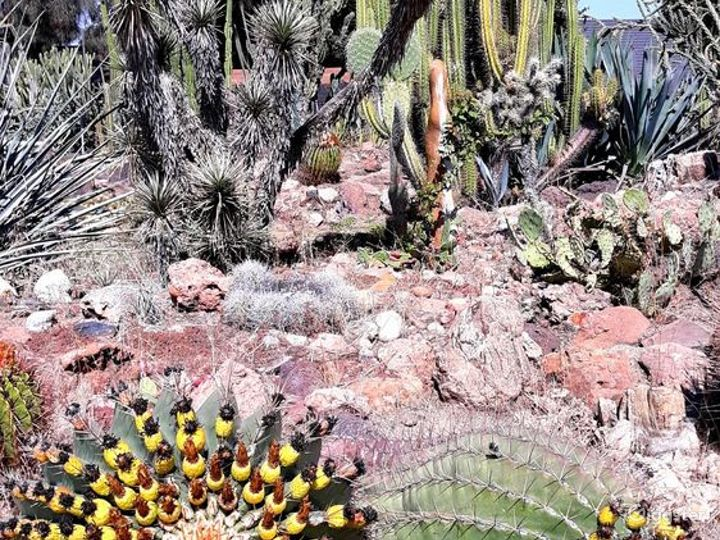 Deutsch Cactus Garden in Fresno Photo 4