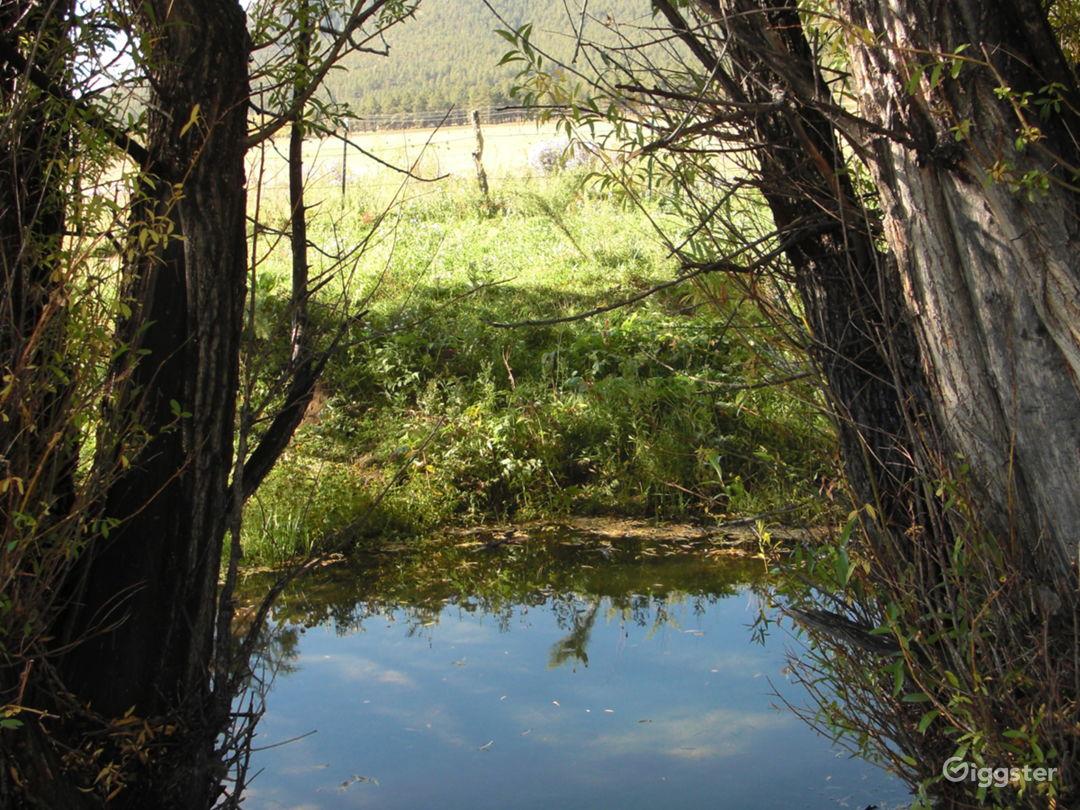 Cebolla Creek, w/ artesian spring.