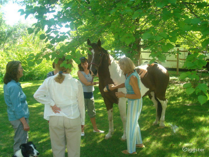 One of our equine-assisted Reiki sessions