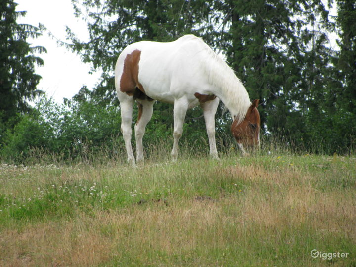 Brick House, Rolling Pastures, Equestrian Estate  Photo 3
