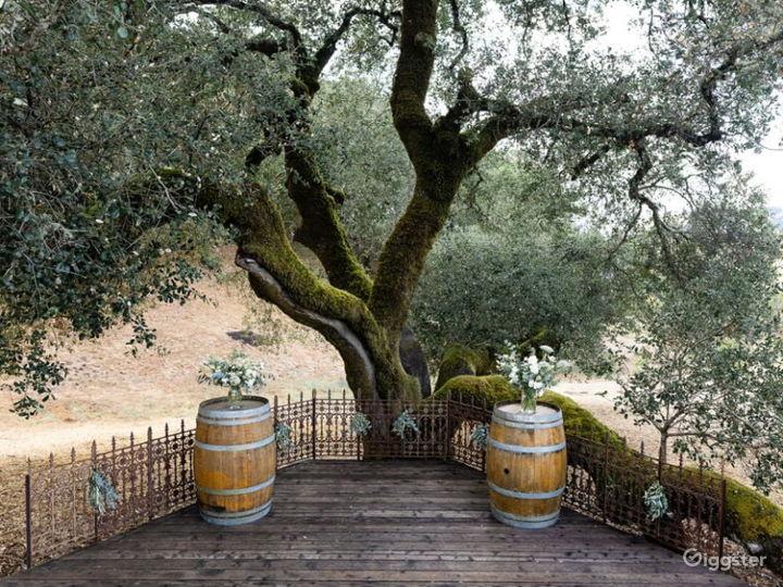 Rustic Oak Tree Terrace in California Wine Country Photo 3