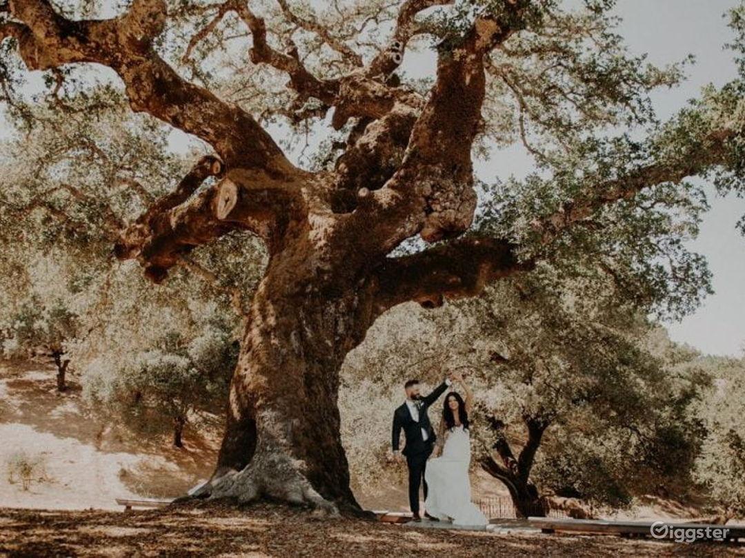 Rustic Oak Tree Terrace in California Wine Country Photo 1
