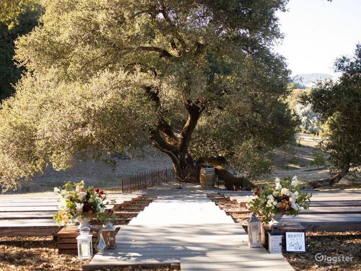 Rustic Oak Tree Terrace in California Wine Country Photo 2
