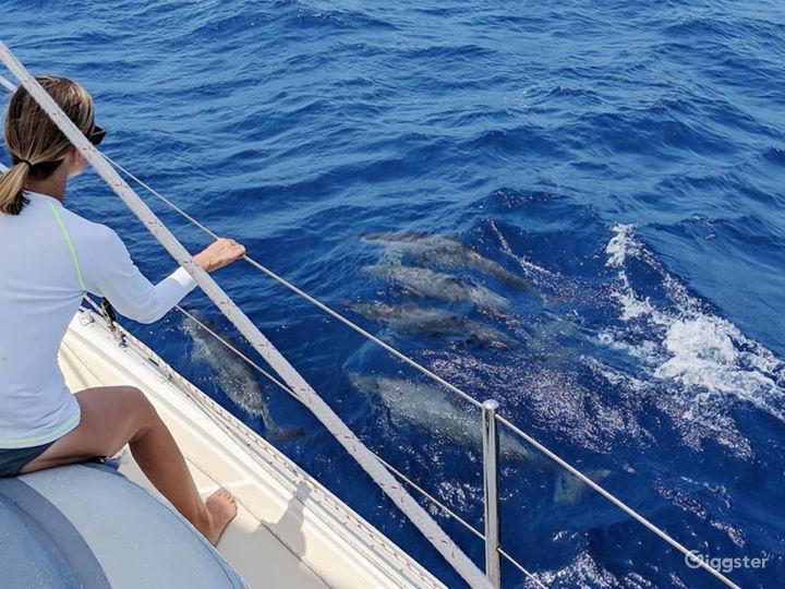 Sailing trip to the island Photo 4