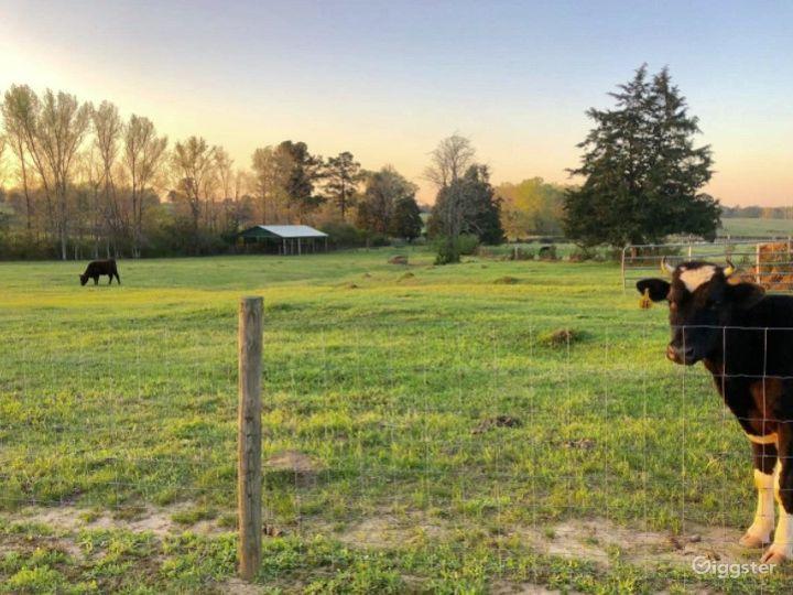 DIRT ROAD FARM Photo 5