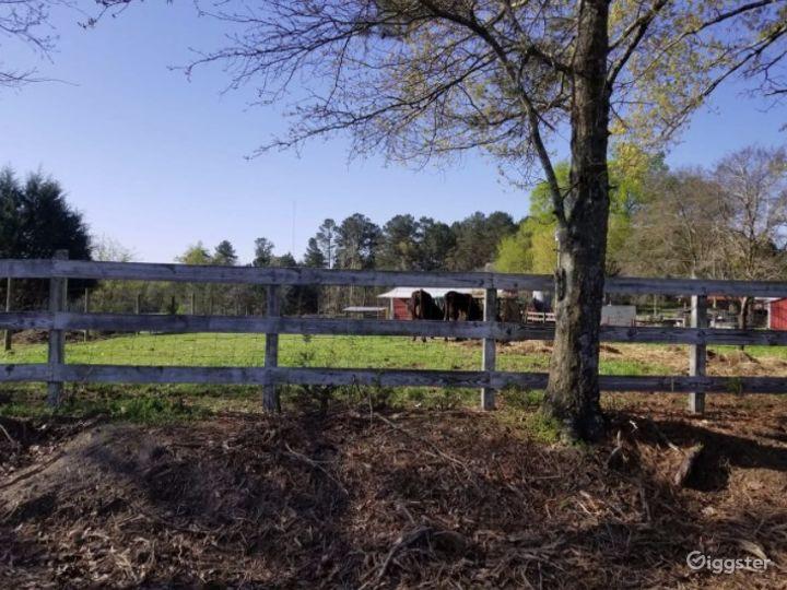 DIRT ROAD FARM Photo 3