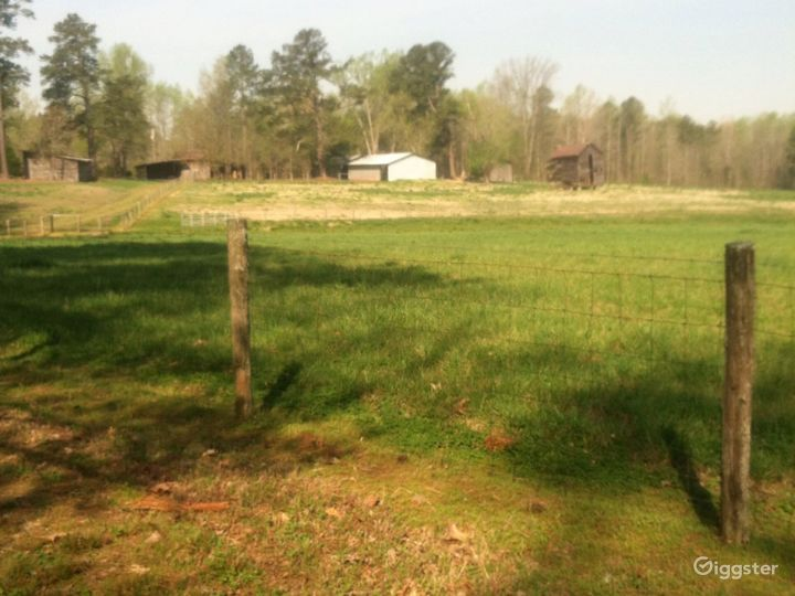 Looking onto the pastures from the wooded area