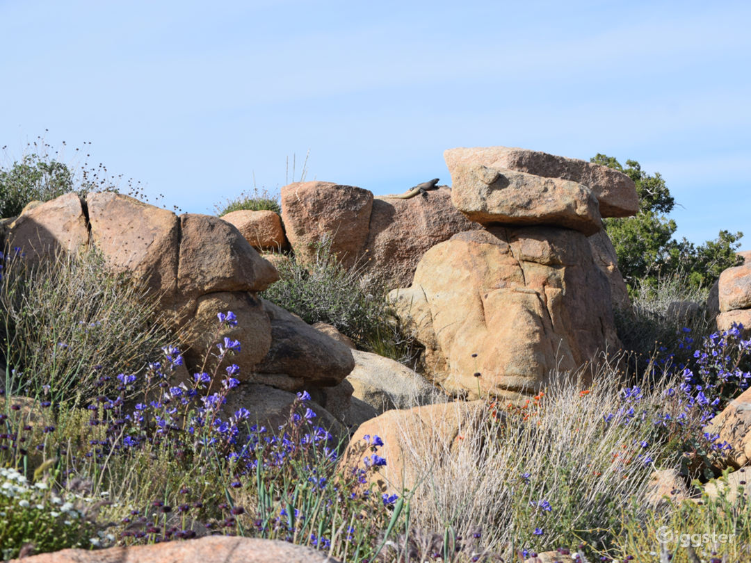 Boulders and foliage on the property - with a giant chuckwalla in view.