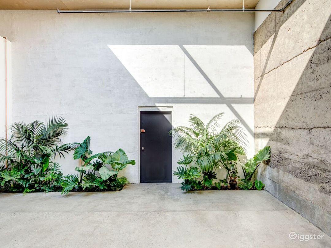 Sunny Minimalist Plant-Filled Studio  Photo 3