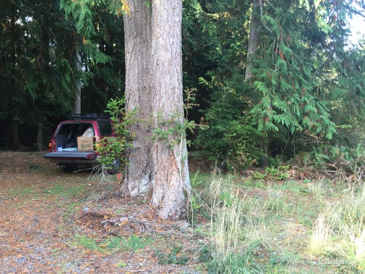 Private Forested Land 100 yr old Trees  Photo 2