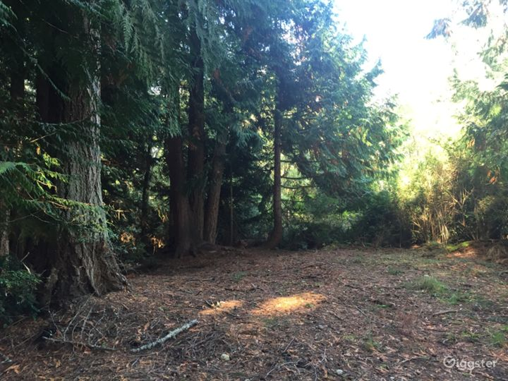 Private Forested Land 100 yr old Trees  Photo 3