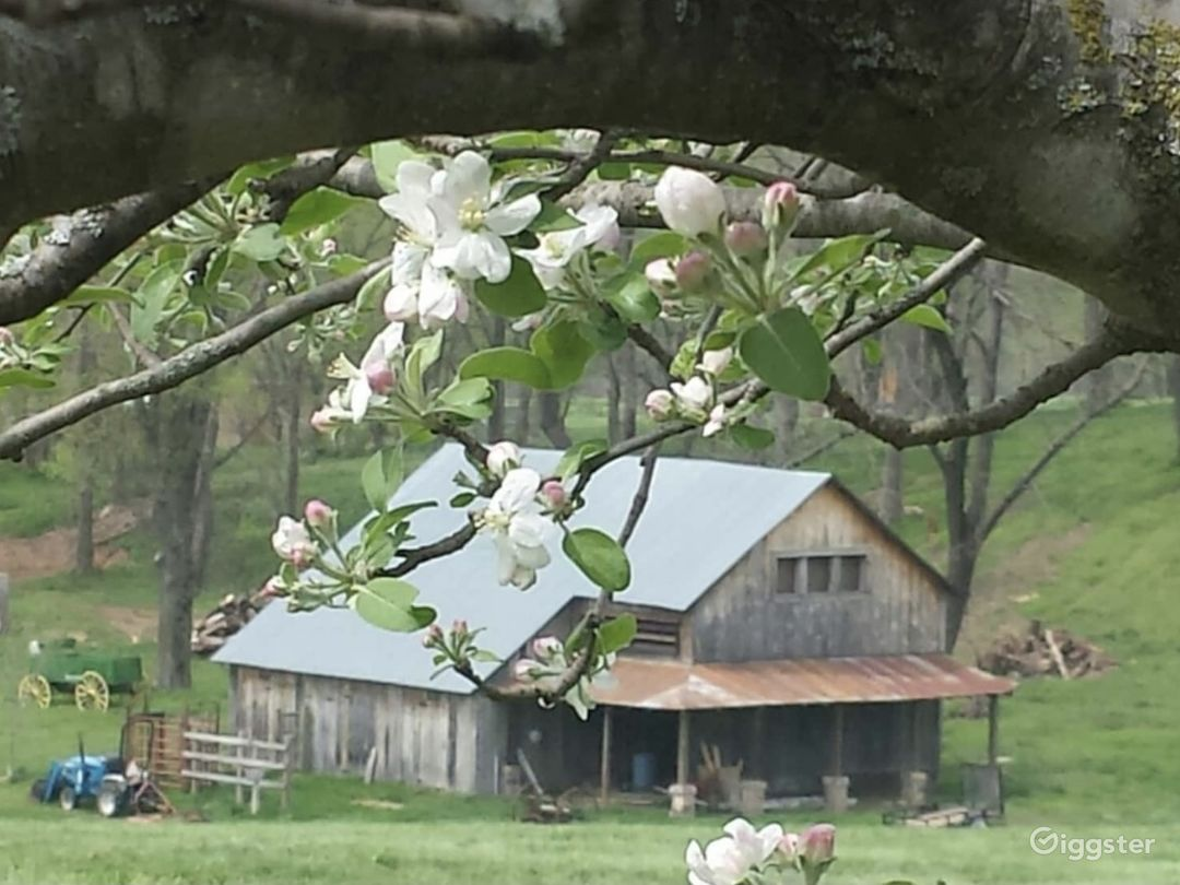 The barn during springtime
