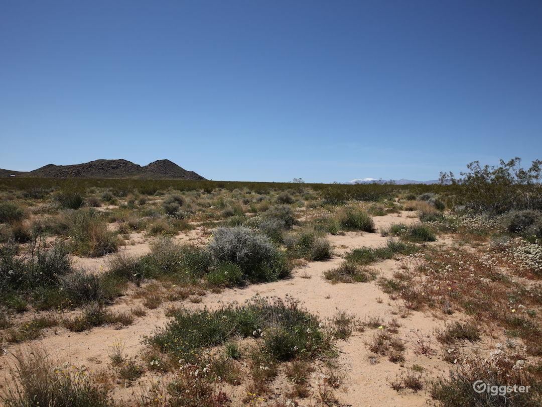 Open Desert Landscape in Joshua Tree CA Photo 3