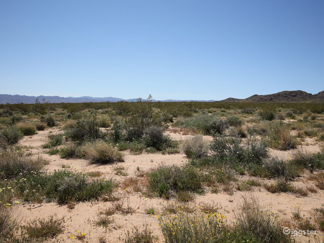 Open Desert Landscape in Joshua Tree CA Photo 5