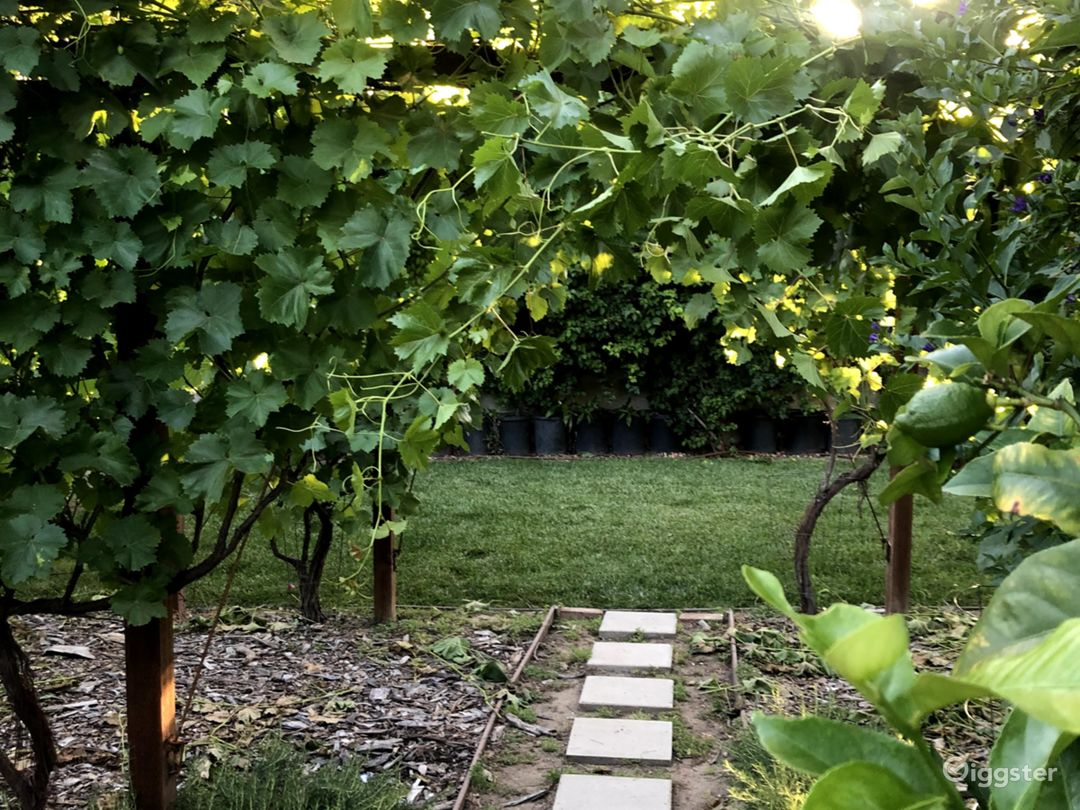 view of back lawn through the vineyard