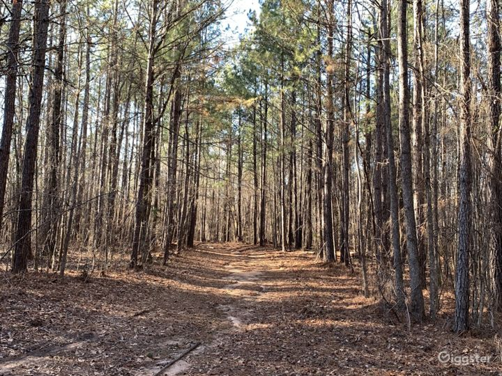 Wooded Trail