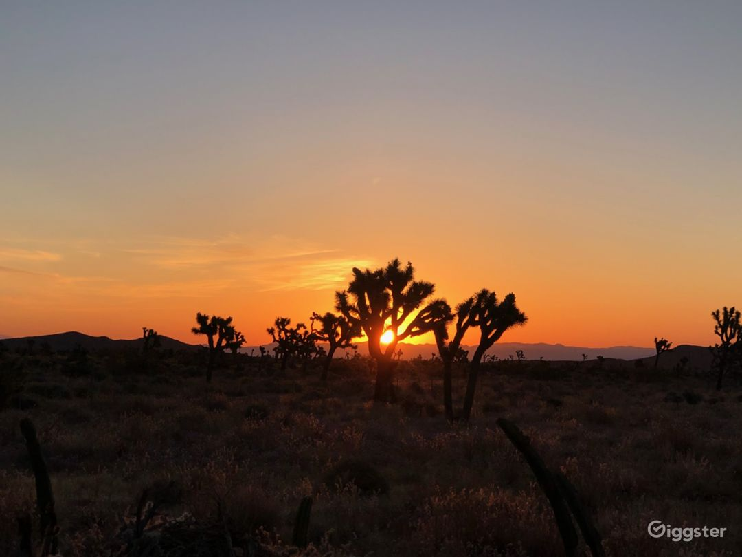 8.5 acres Joshua Tree/ Yucca Valley Mature Trees!  Photo 2