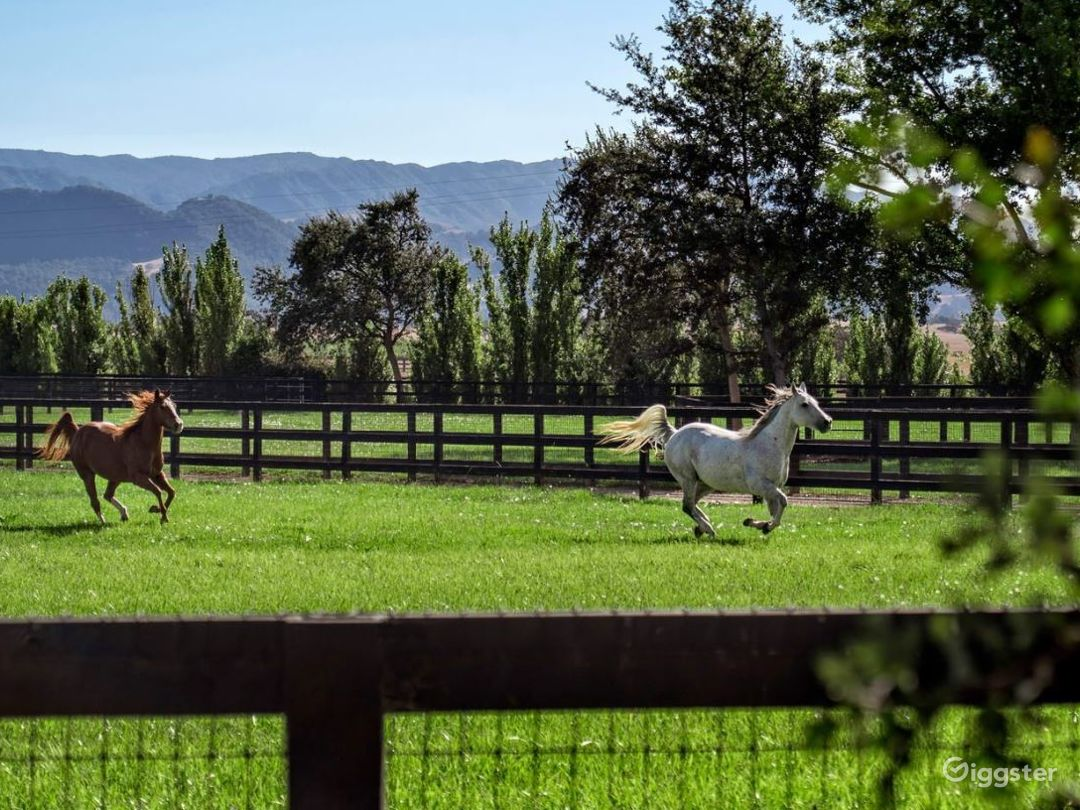 Equestrian Ranch and Beautiful Land Photo 5