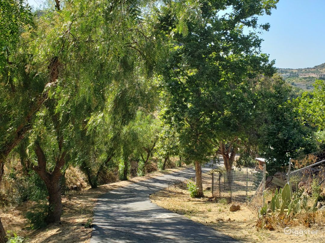 Our long driveway with mature trees as you enter the property