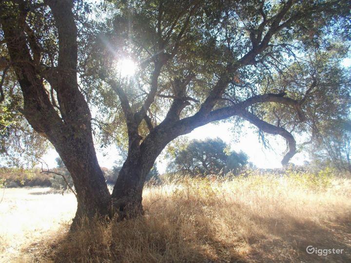 California Wine Country Rustic Ranch Estate Photo 5