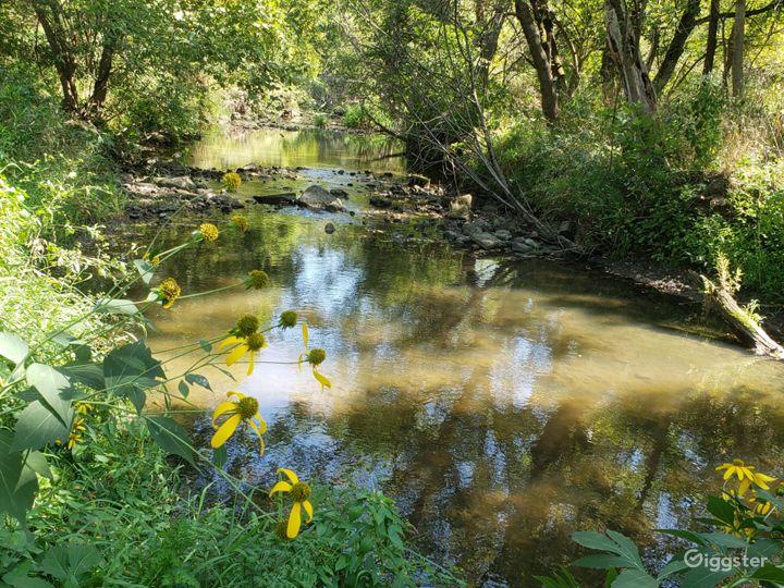 Flowers by creek