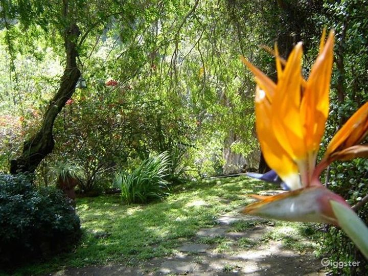 Cozy Hollywood Hills Home Photo 4
