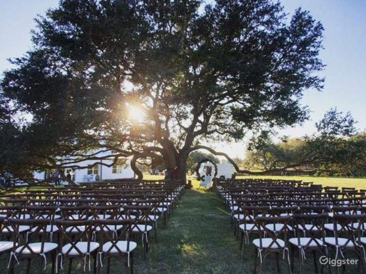 Majestic live oak tree with cross-back chairs and linen cushion seating. We have enough furniture for up to 1000 people. The live oak tree is adjacent to the main building.