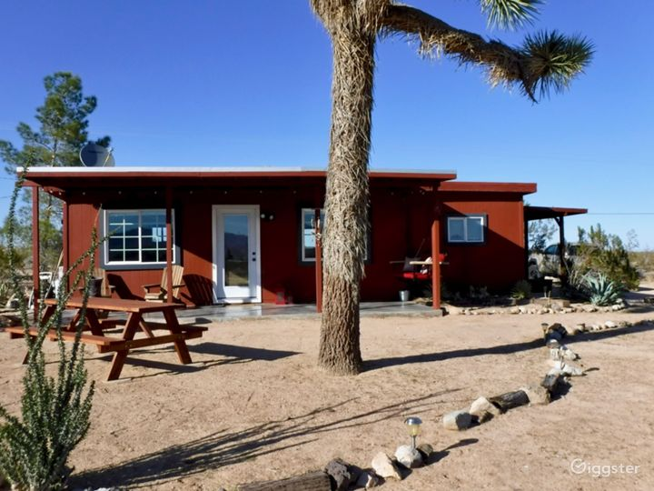 Come relax under our Joshua Tree