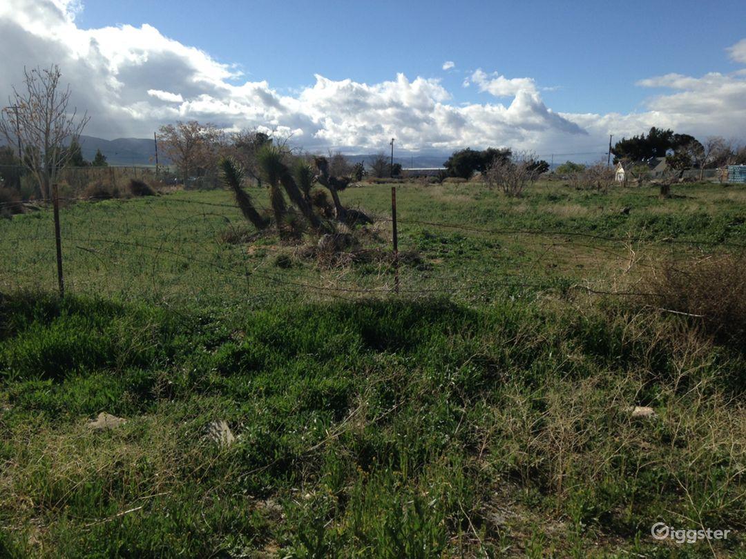 Brush desert area next to pipeyard Photo 5