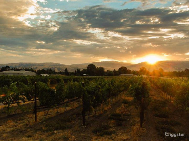 One of a kind Vineyards and Winery in San Martin Photo 2