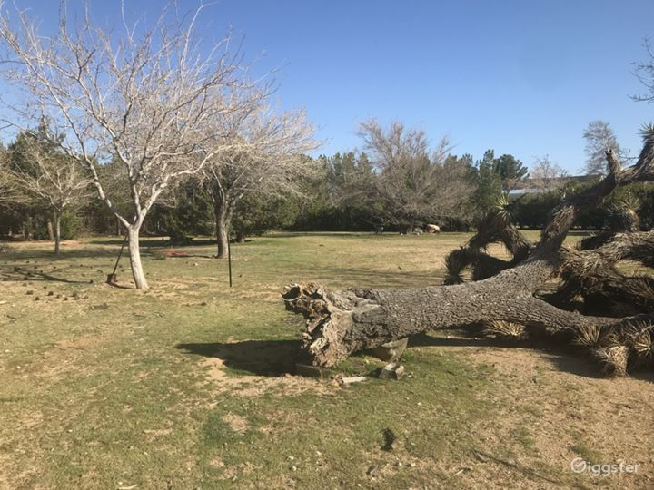 Tree Filled Desert Ranch Style Location  Photo 5
