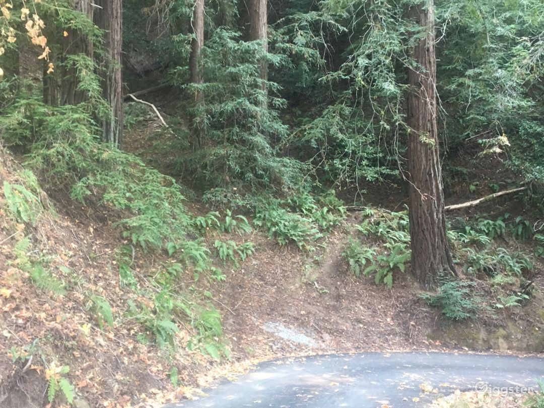 Over Six Sunny Acres Heart of Redwoods Cabin Photo 5