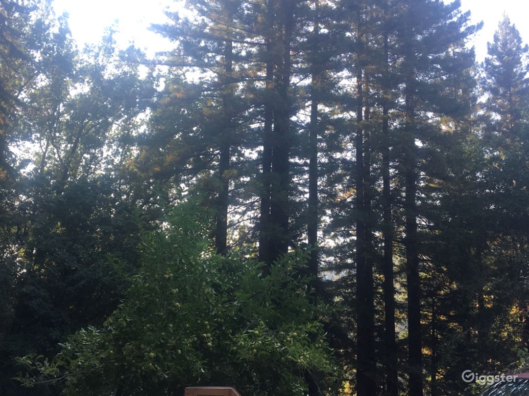 Over Six Sunny Acres Heart of Redwoods Cabin Photo 4