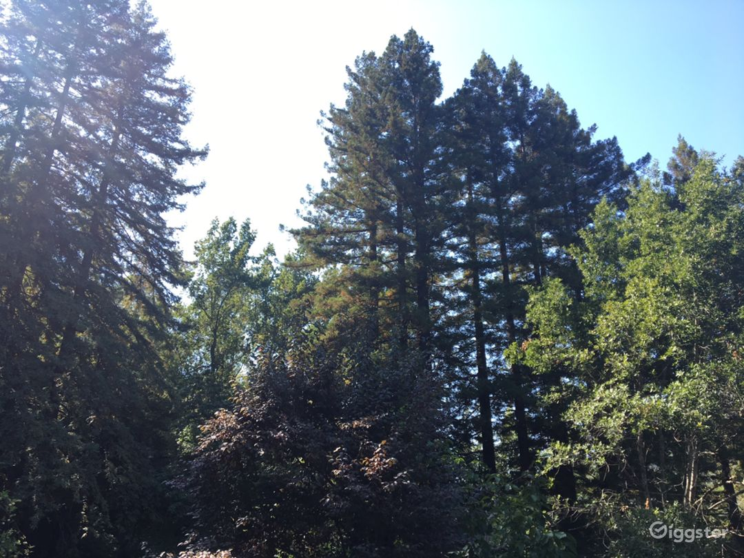 Over Six Sunny Acres Heart of Redwoods Cabin Photo 1