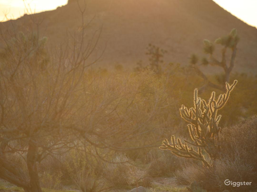 40 acres of wild desert land with mountain views.