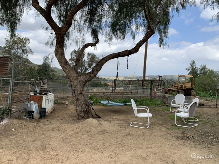 Garden with tree and tree swing