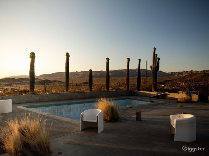 The Saguaro Cactus Farm near Joshua Tree