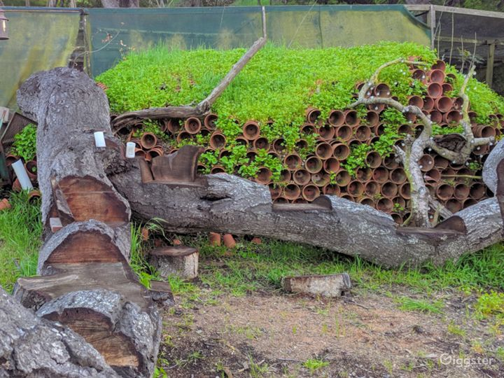 carved felled oak tree with seating for 8, and 2000 terracotta pots, with miner's lettuce growing atop