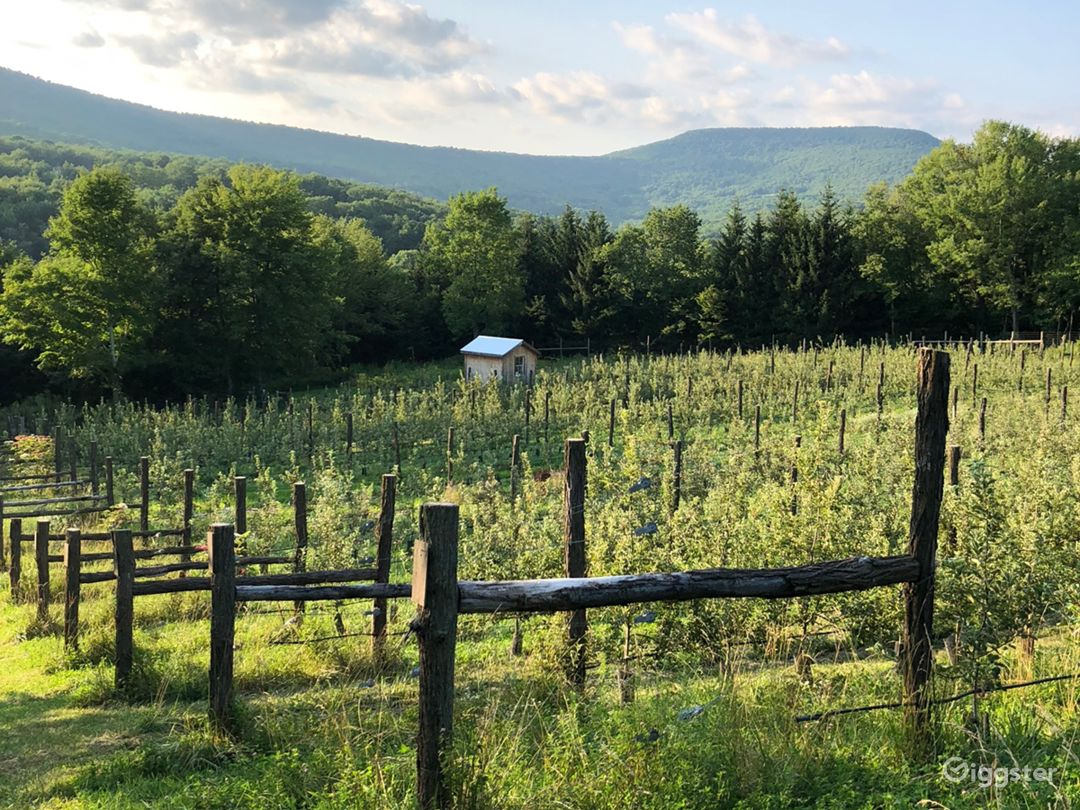 Small farm and orchard Photo 1