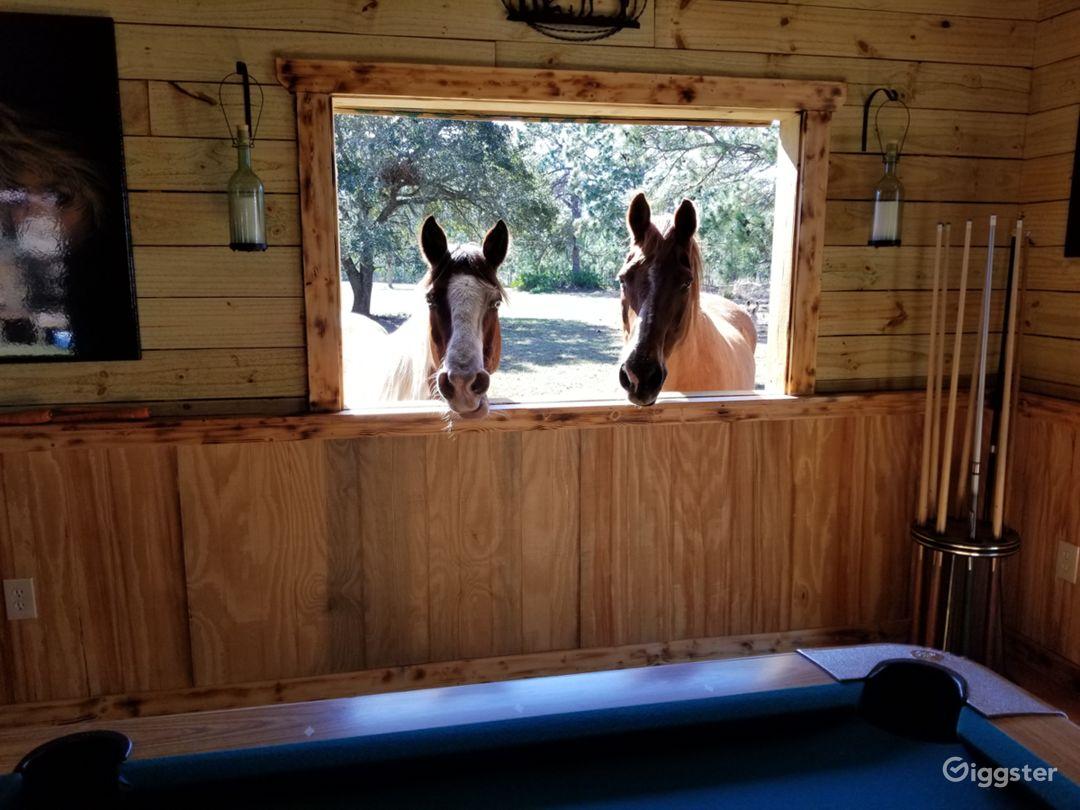 Horses looking in Saloon
