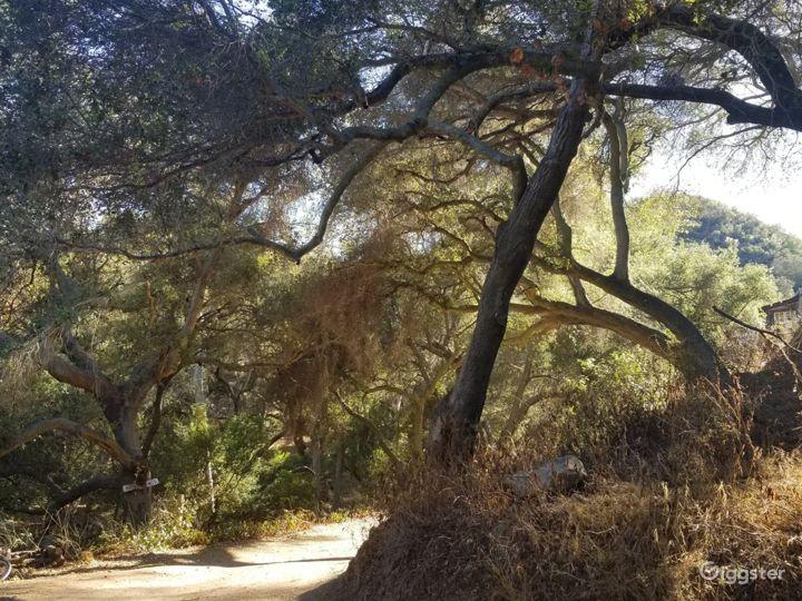 Oak tree forest, boulder creek, mountains, cabins Photo 2