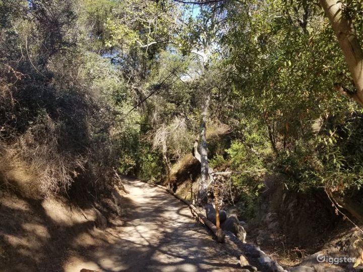 Oak tree forest, boulder creek, mountains, cabins Photo 4