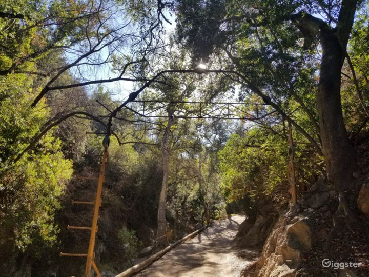 Oak tree forest, boulder creek, mountains, cabins