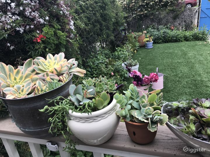 Lots of colorful potted succulents, plants, and flowers. Overgrown and casual.