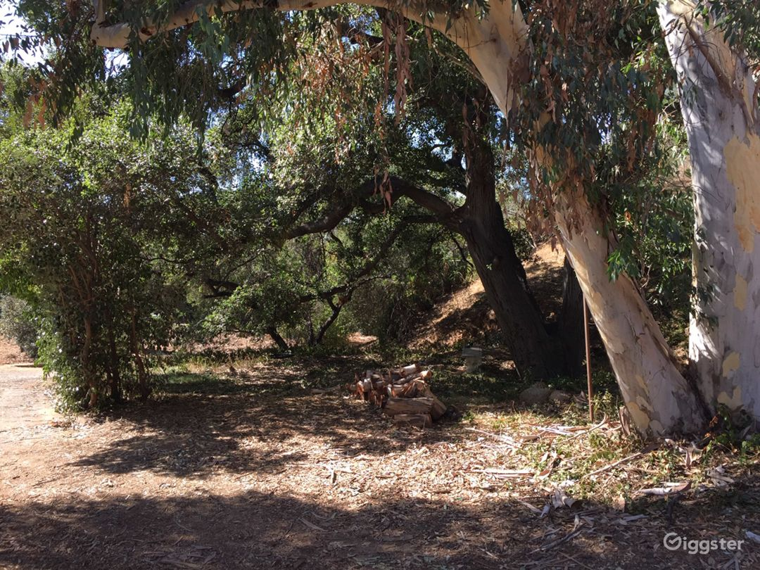 Ancient Oak Grove