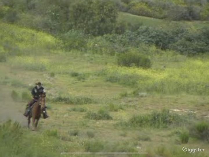 Large Western Town Horse Ranch w/ Animals Photo 4